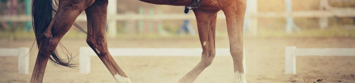 horse legs in arena