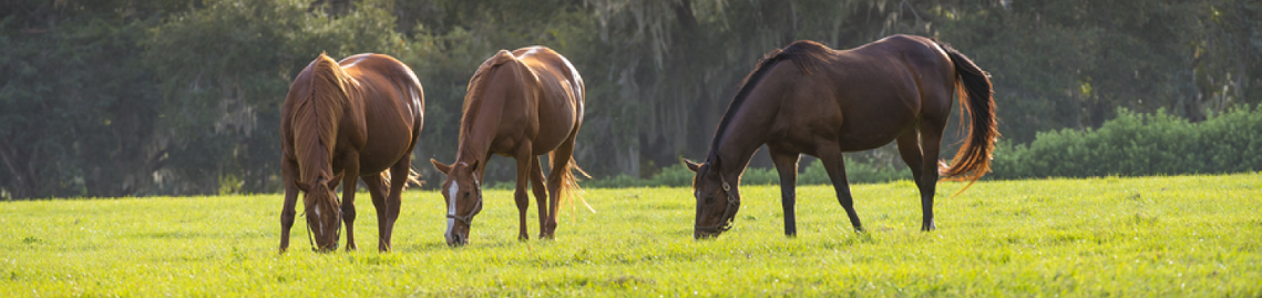 three horses in green pasture